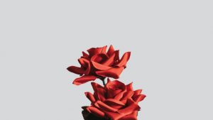 Minimalist Rose Wallpapers – Top Free Minimalist Rose Backgrounds