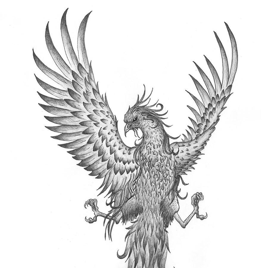 900x900 Phoenix Birds Tattoos Cool Wallpaper for Android - APK Download