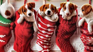 Christmas Puppies Wallpapers – Top Free Christmas Puppies Backgrounds