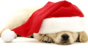 Christmas Puppy Wallpapers – Top Free Christmas Puppy Backgrounds