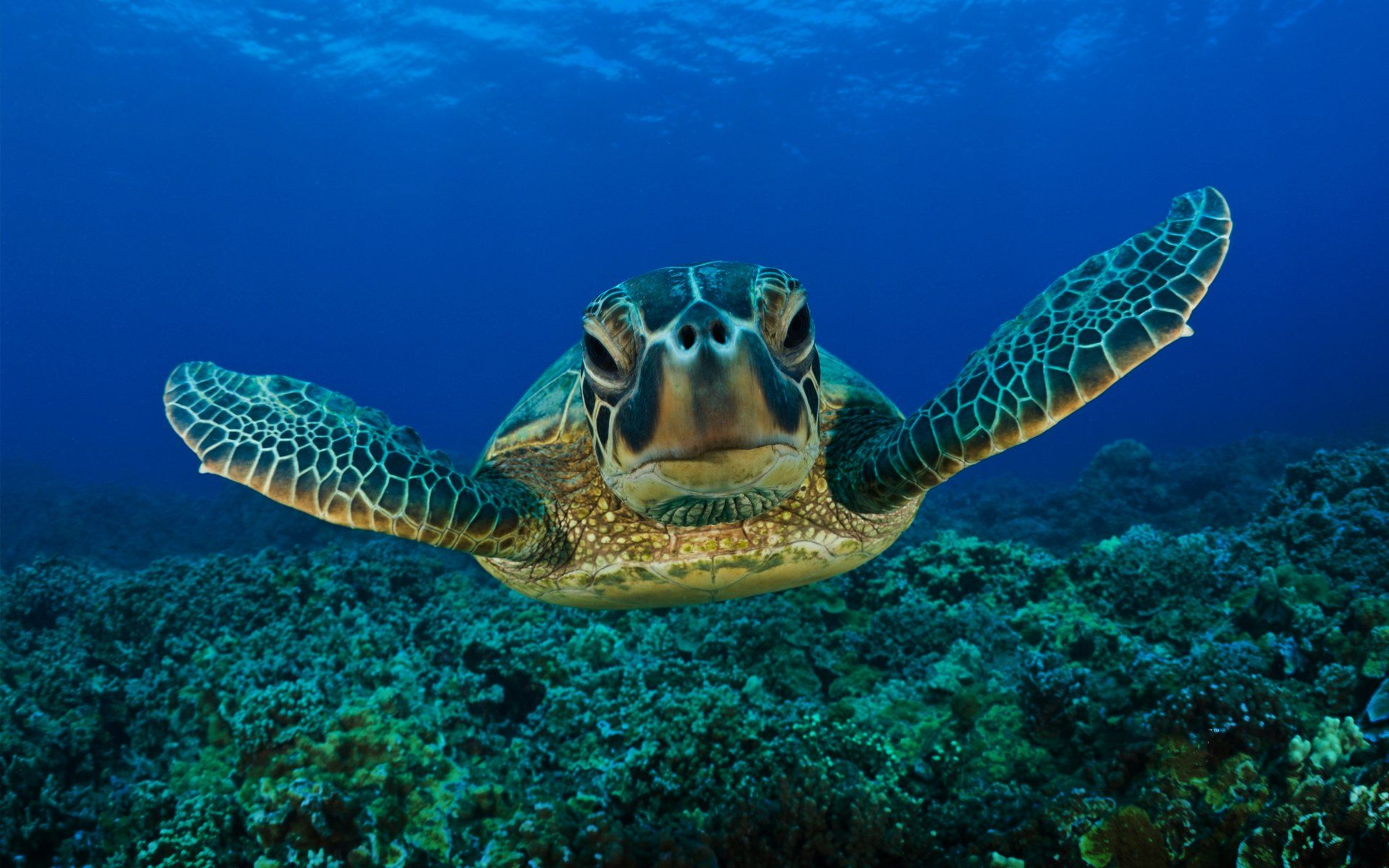 1920x1200 246 Turtle HD Wallpapers | Background Images - Wallpaper Abyss