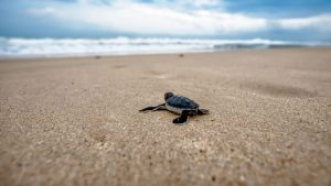 Baby Turtle Wallpapers – Top Free Baby Turtle Backgrounds