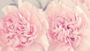 Pastel Flowers Phone Wallpapers – Top Free Pastel Flowers Phone Backgrounds