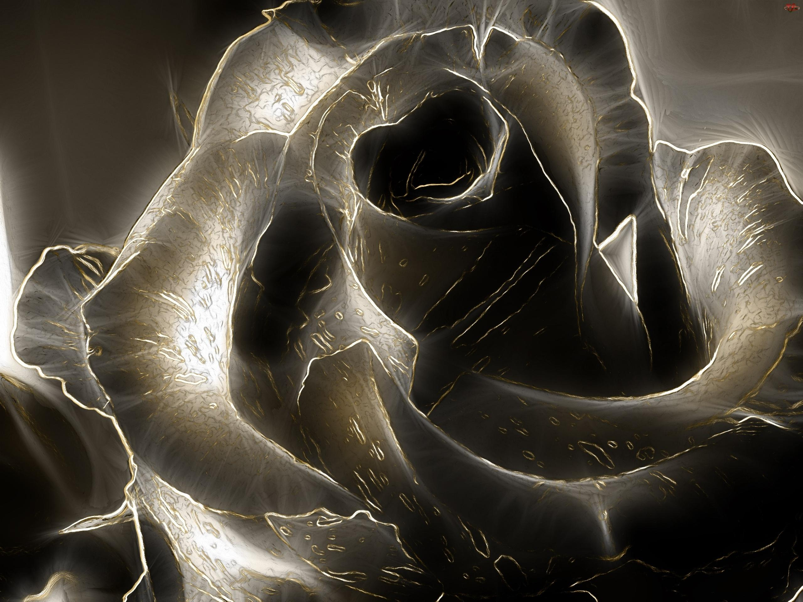 2560x1920 Black Rose Wallpapers High Quality | Download Free