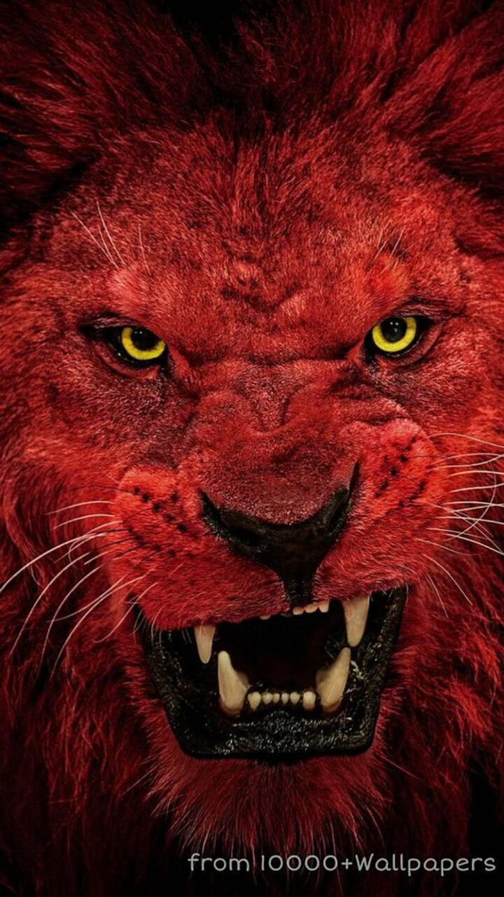 720x1280 Red lion Wallpaper by mirapav - 71 - Free on ZEDGE™
