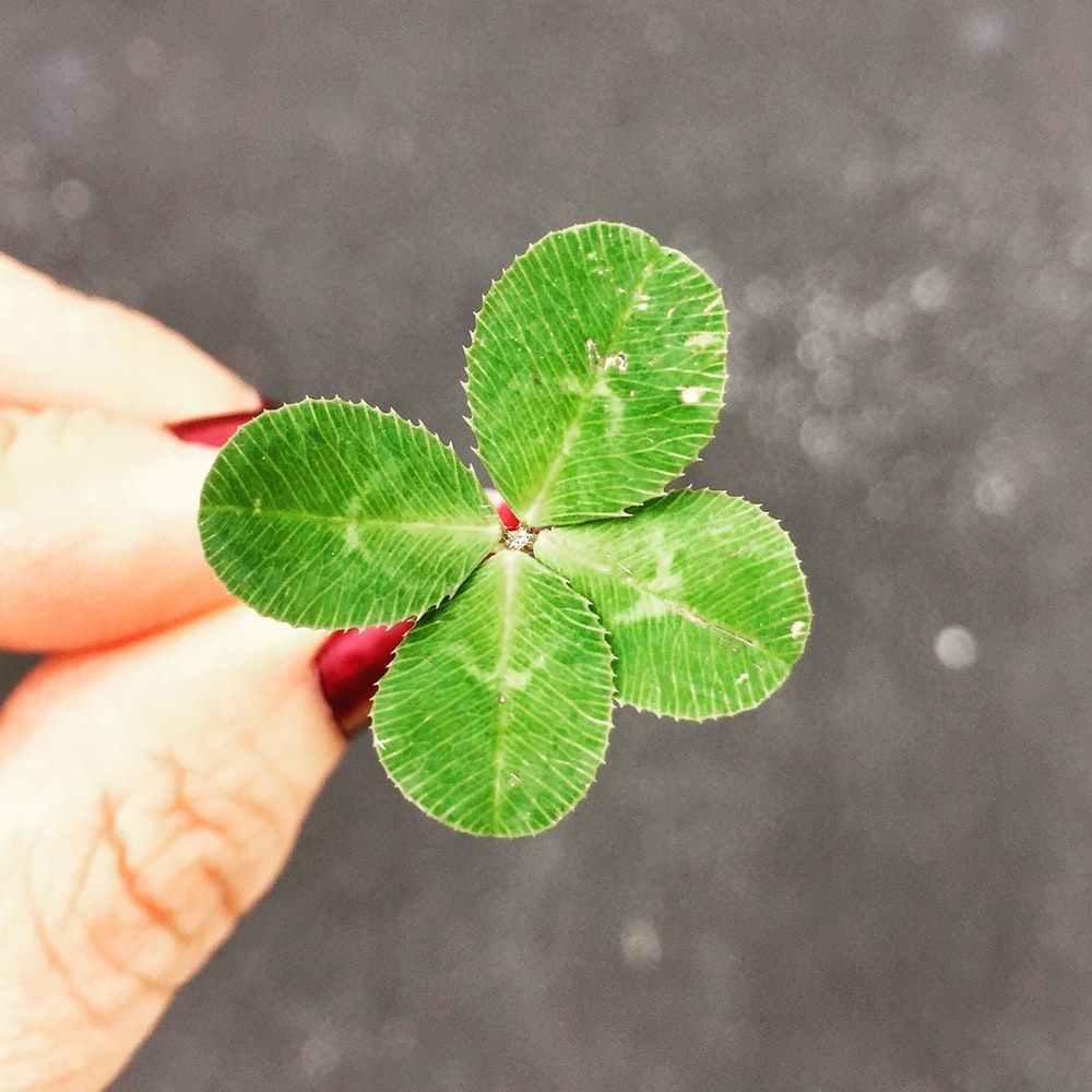 1000x1000 500+ Lucky Pictures | Download Free Images on Unsplash
