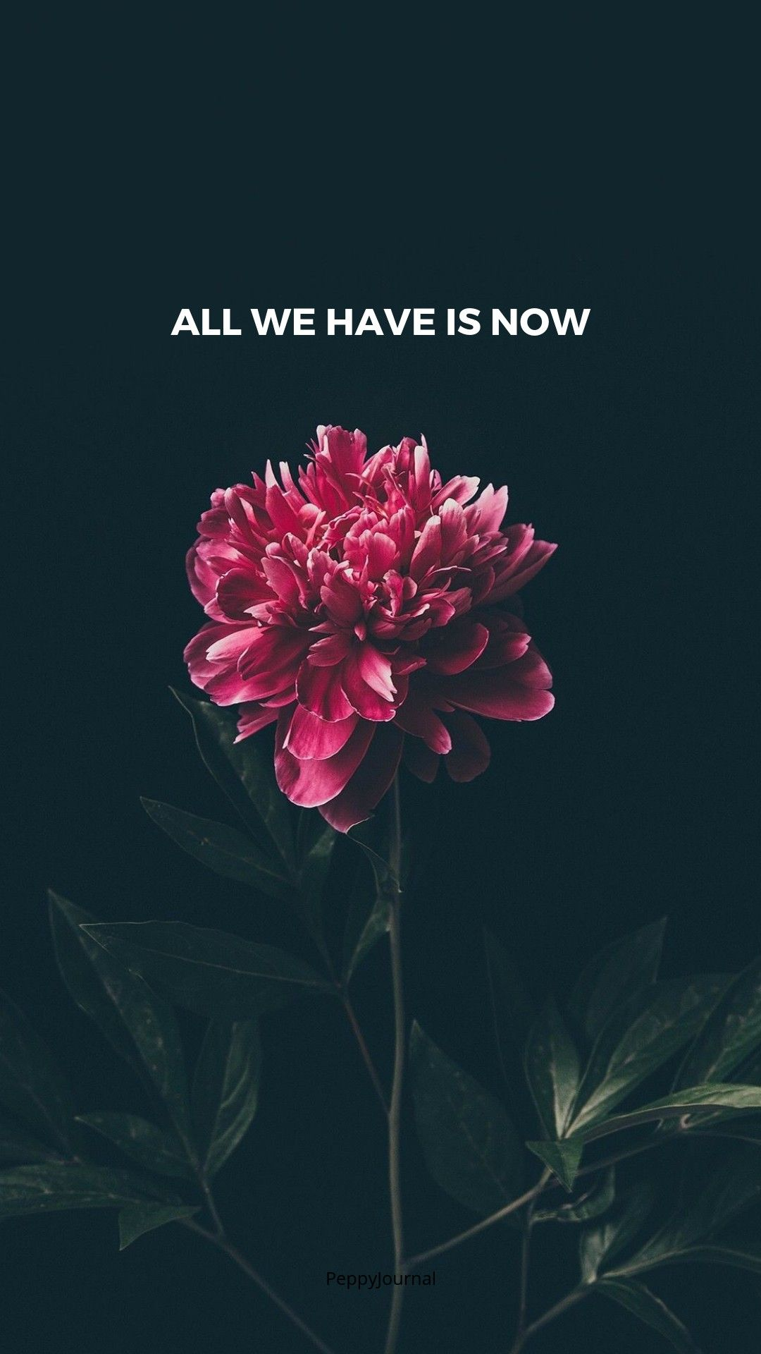 1080x1920 quotes   Inpirational Quotes   Flower wallpaper, Tumblr ...
