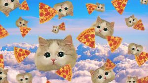 Pizza Cat Wallpapers – Top Free Pizza Cat Backgrounds