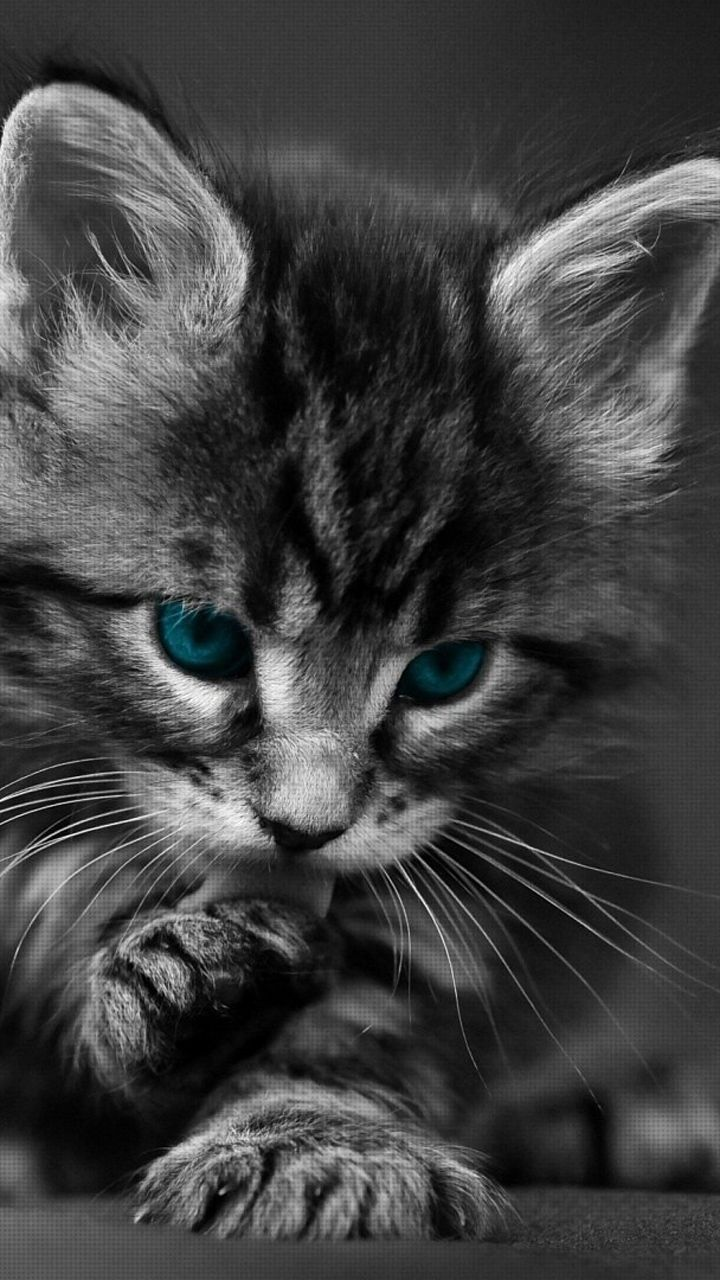 720x1280 New Cats Wallpapers Download 80 Cute Cat Pics & HD Images Free
