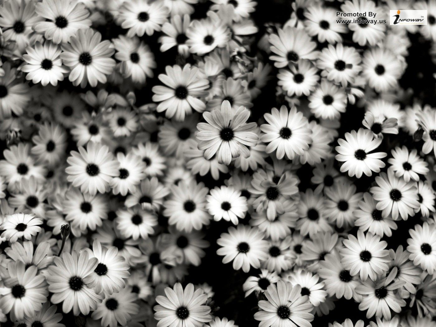 1400x1050 Free download Nature Flowers Black And White Flowers ...