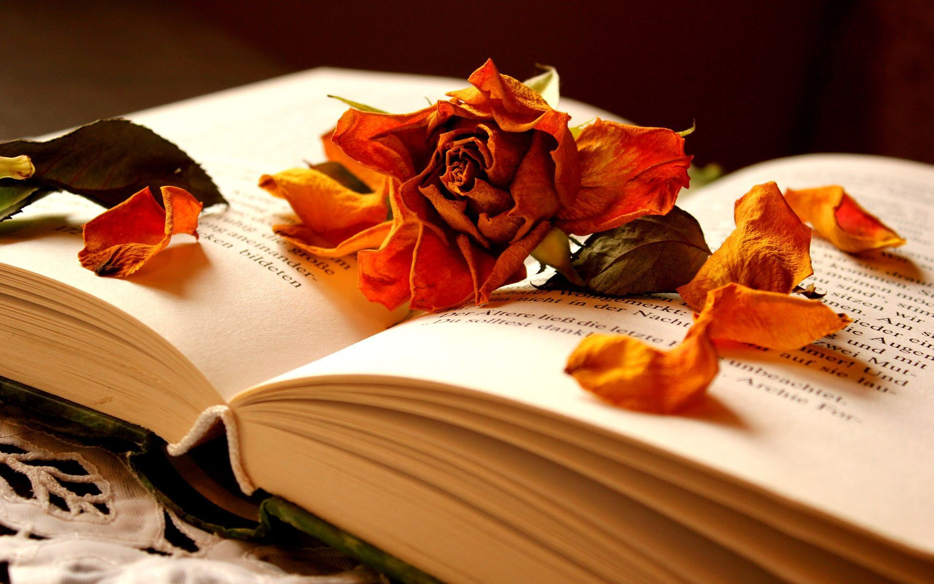 1920x1200 Autumn flowers in a book of memories. Bright Wallpapers ...
