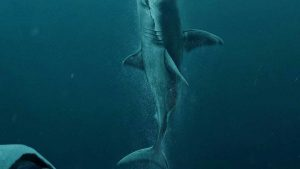 Shark Phone Wallpapers – Top Free Shark Phone Backgrounds