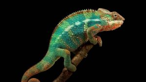 Chameleon Phone Wallpapers – Top Free Chameleon Phone Backgrounds