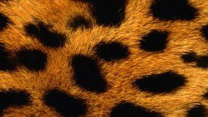 Animal Print iPhone Wallpapers – Top Free Animal Print iPhone Backgrounds