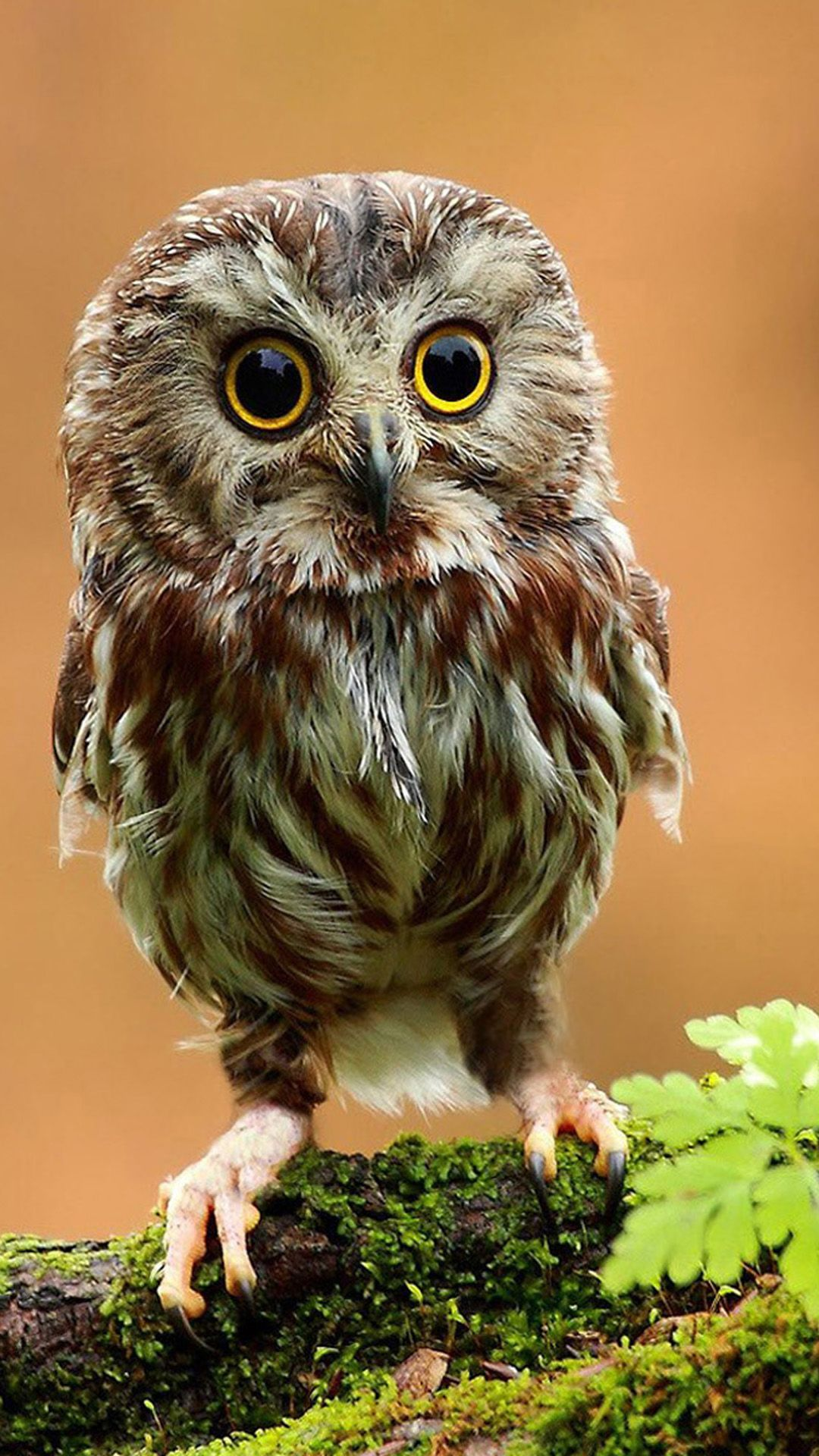 1080x1920 Little Owl In God's eyes #iPhone #6 #plus #wallpaper | iPhone 6~8 ...