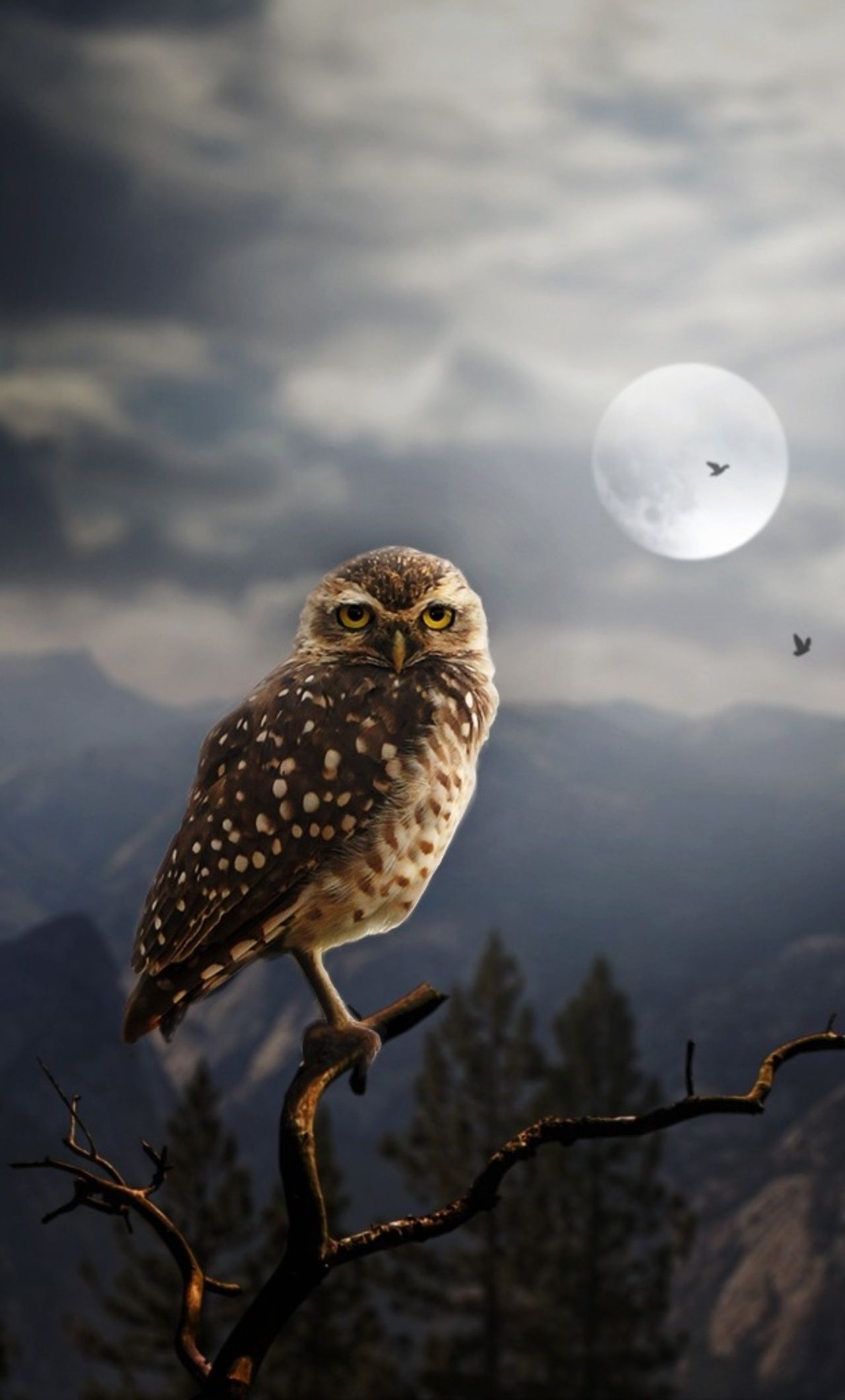 1280x2120 1280x2120 Moon Fantasy Owl iPhone 6+ HD 4k Wallpapers, Images ...