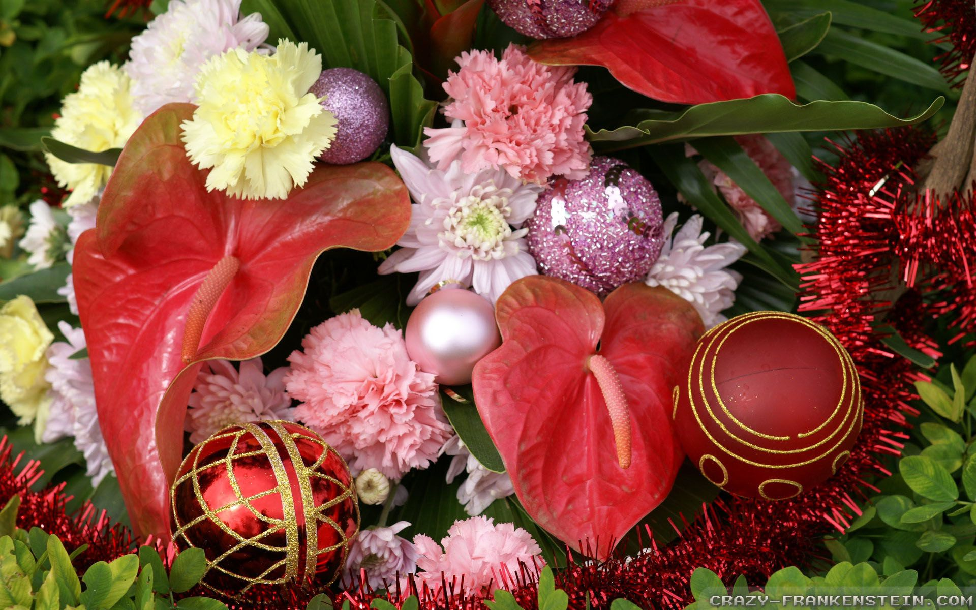 1920x1200 Christmas Flowers wallpapers - Crazy Frankenstein