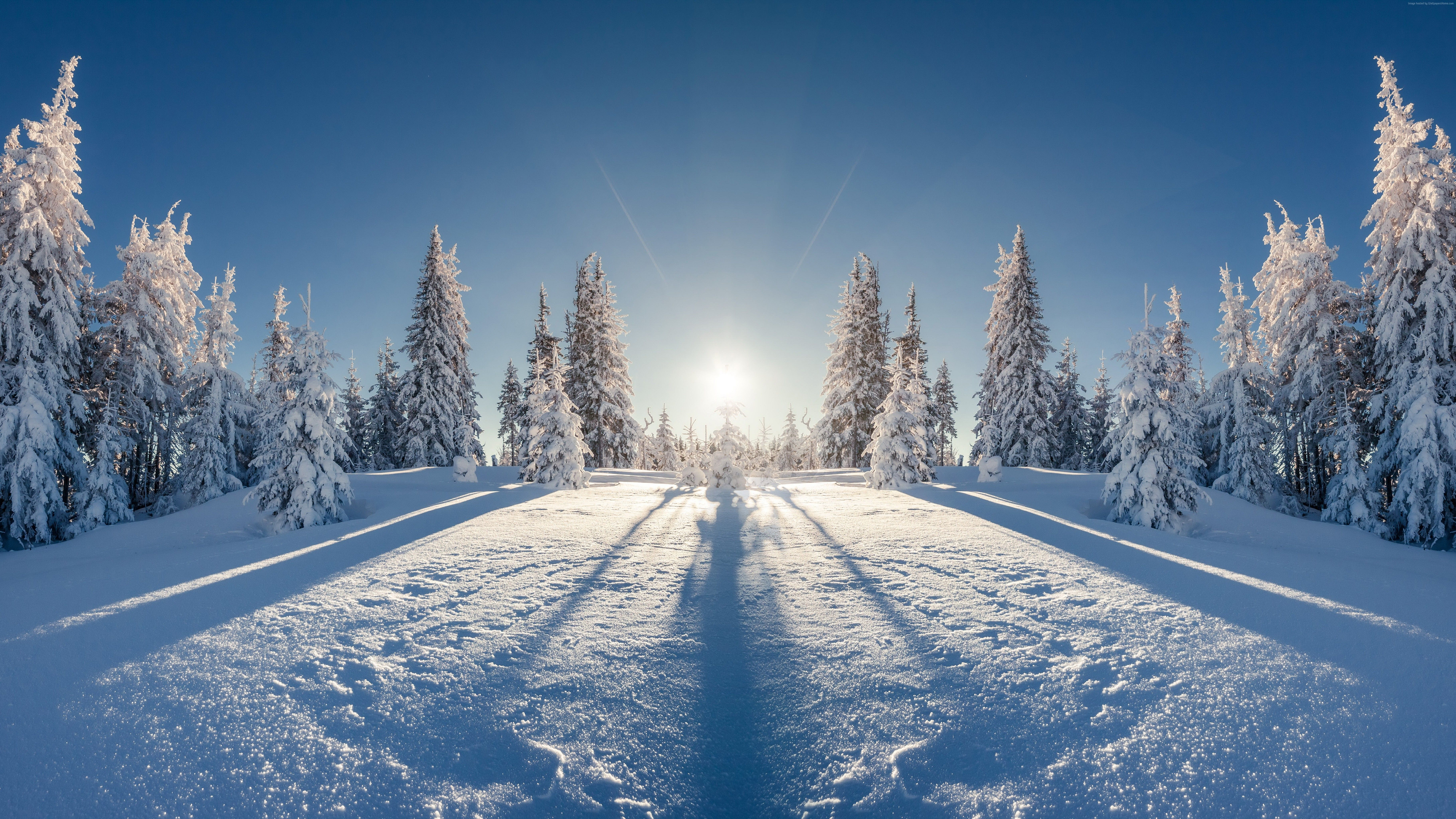 7297x4105 102767 #snow, #8k, #tree, #forest, #winter | Nature ...