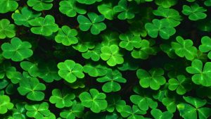Clover Wallpapers – Top Free Clover Backgrounds