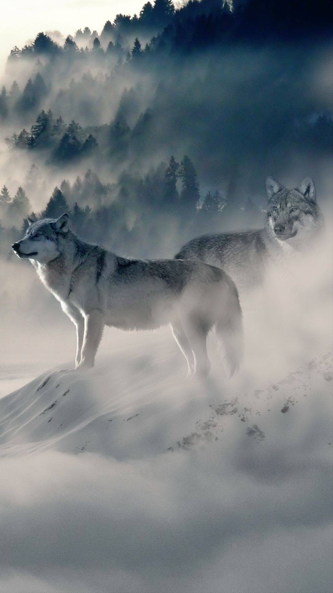 1080x1920 Wolf Pack HD Wallpaper For Your Mobile Phone