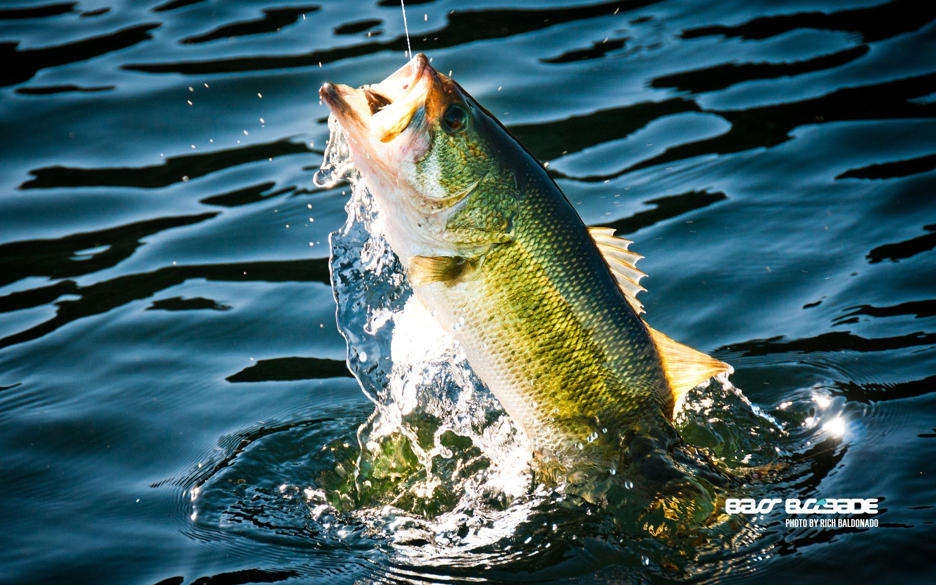 1920x1200 55+ Largemouth Bass Wallpapers on WallpaperPlay