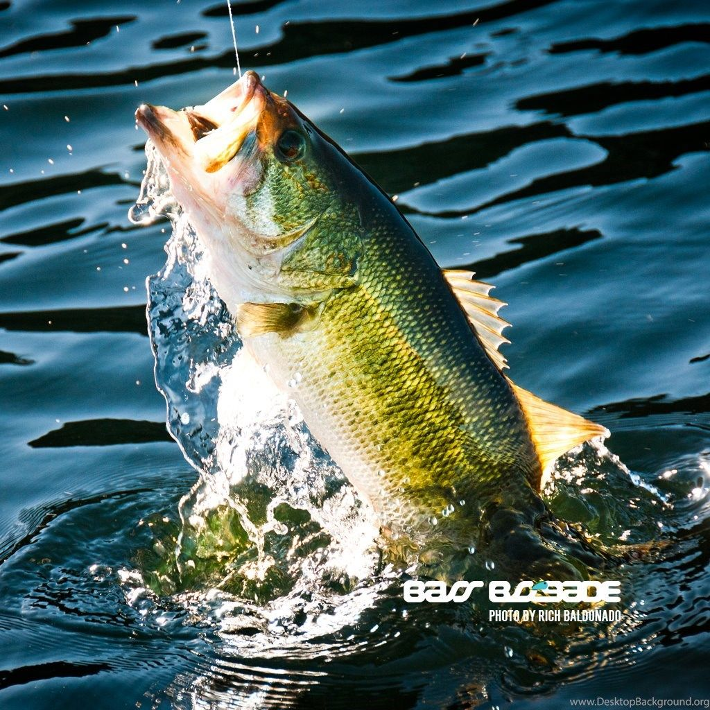 1024x1024 Cool Fishing Wallpapers - Cool Pictures Of Bass Fish ...