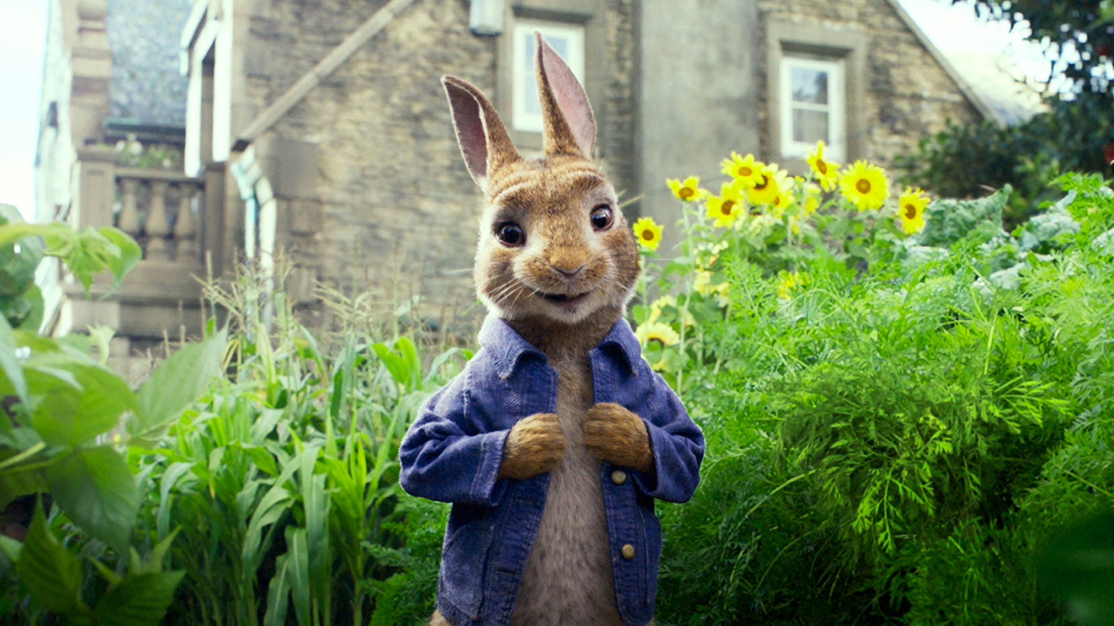 1600x900 Peter Rabbit - 1920x1080 Wallpapers - Full HD Backgrounds