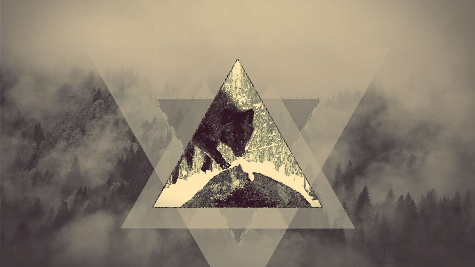 1920x1080 adobe photoshop #cold #fog #forest #pines #predator #triangle ...