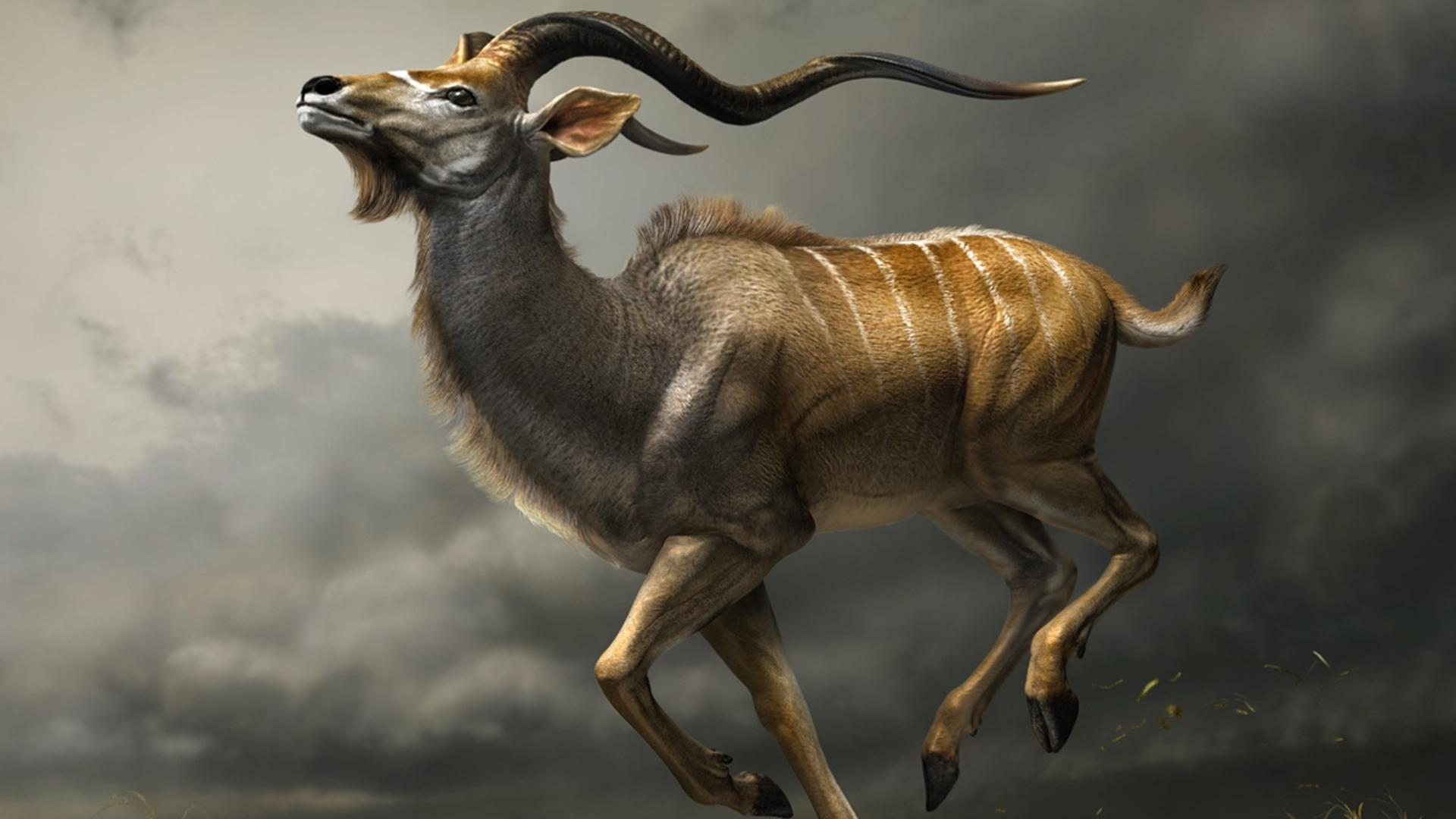 1920x1080 Antelope Wallpapers High Resolution #M4AR24H | WallpapersExpert.com