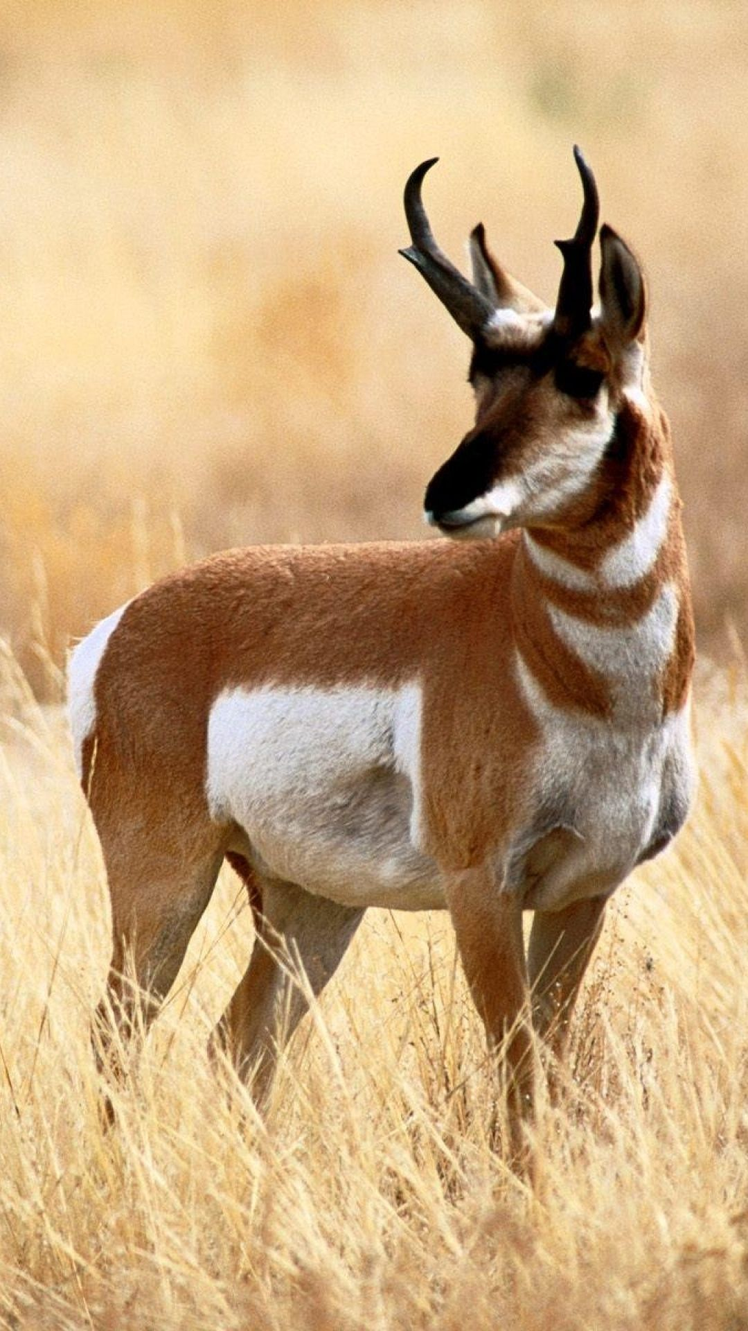 1080x1920 Animal/Antelope (1080x1920) Wallpaper ID: 693932 - Mobile Abyss