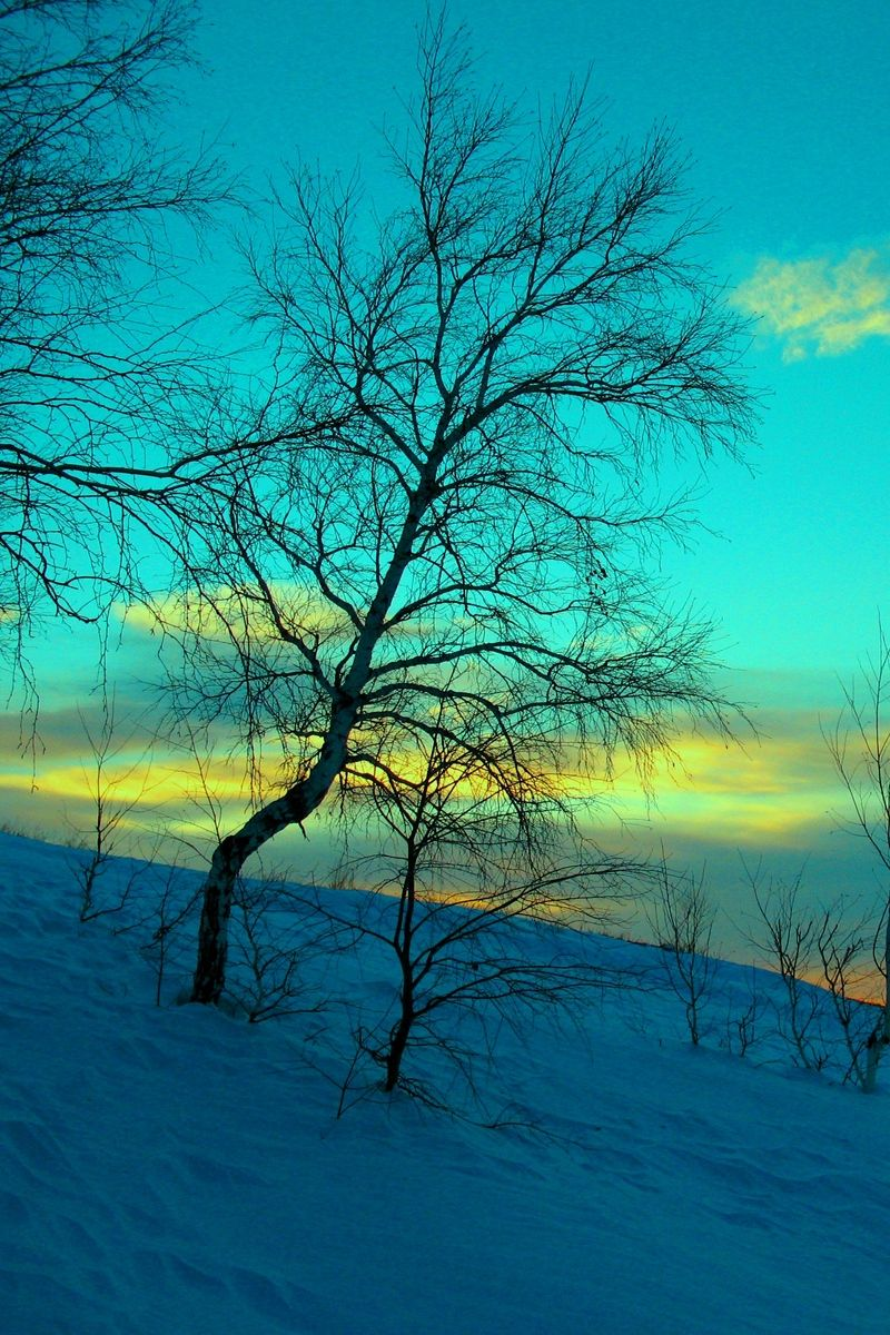 800x1200 Download wallpaper 800x1200 march, winter, snow, frost, nature ...