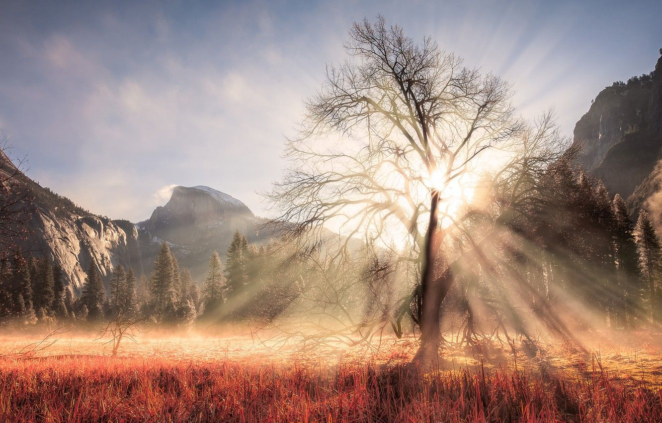 1332x850 Wallpaper winter, forest, the sun, rays, light, mountains ...
