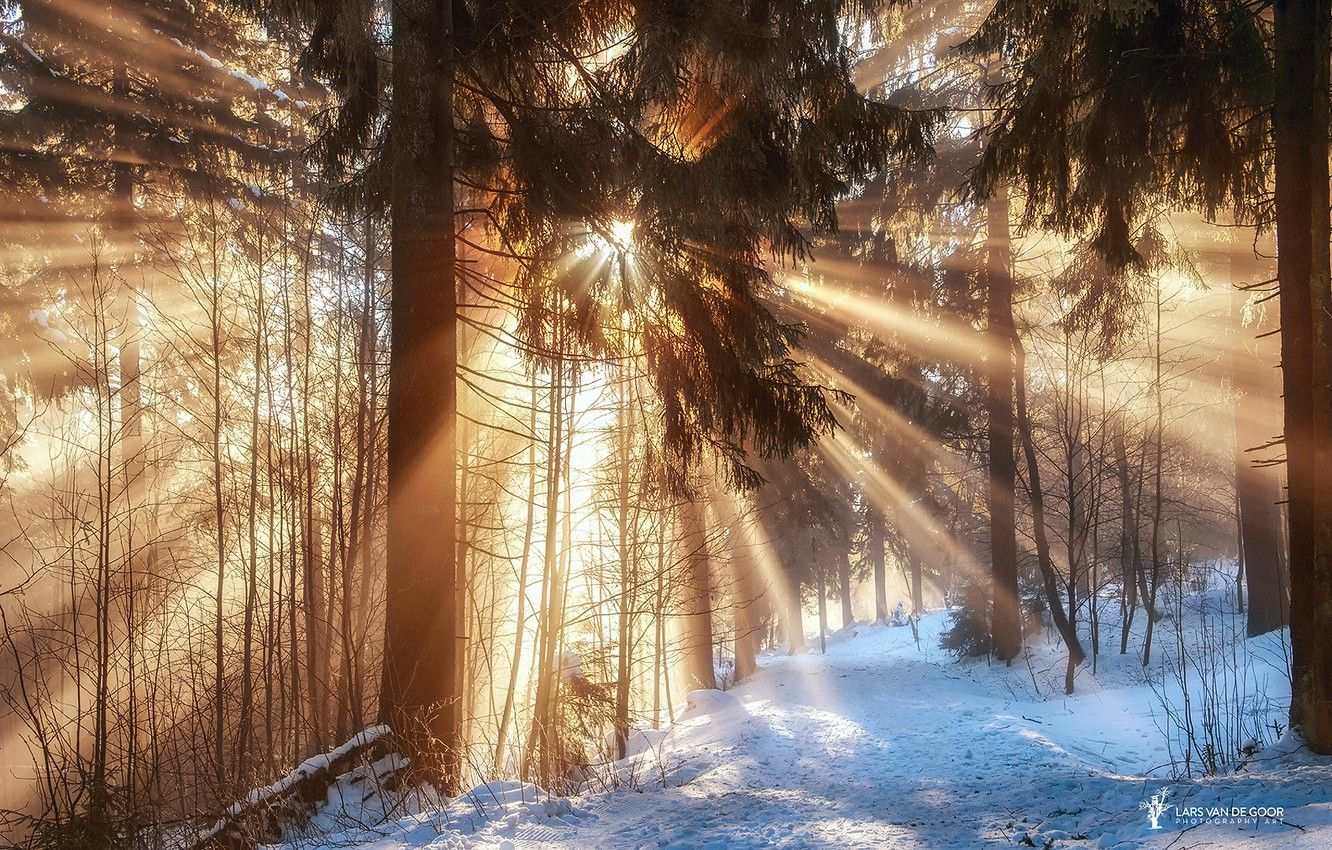 1332x850 Wallpaper winter, forest, the sun, rays, light, snow, branches ...