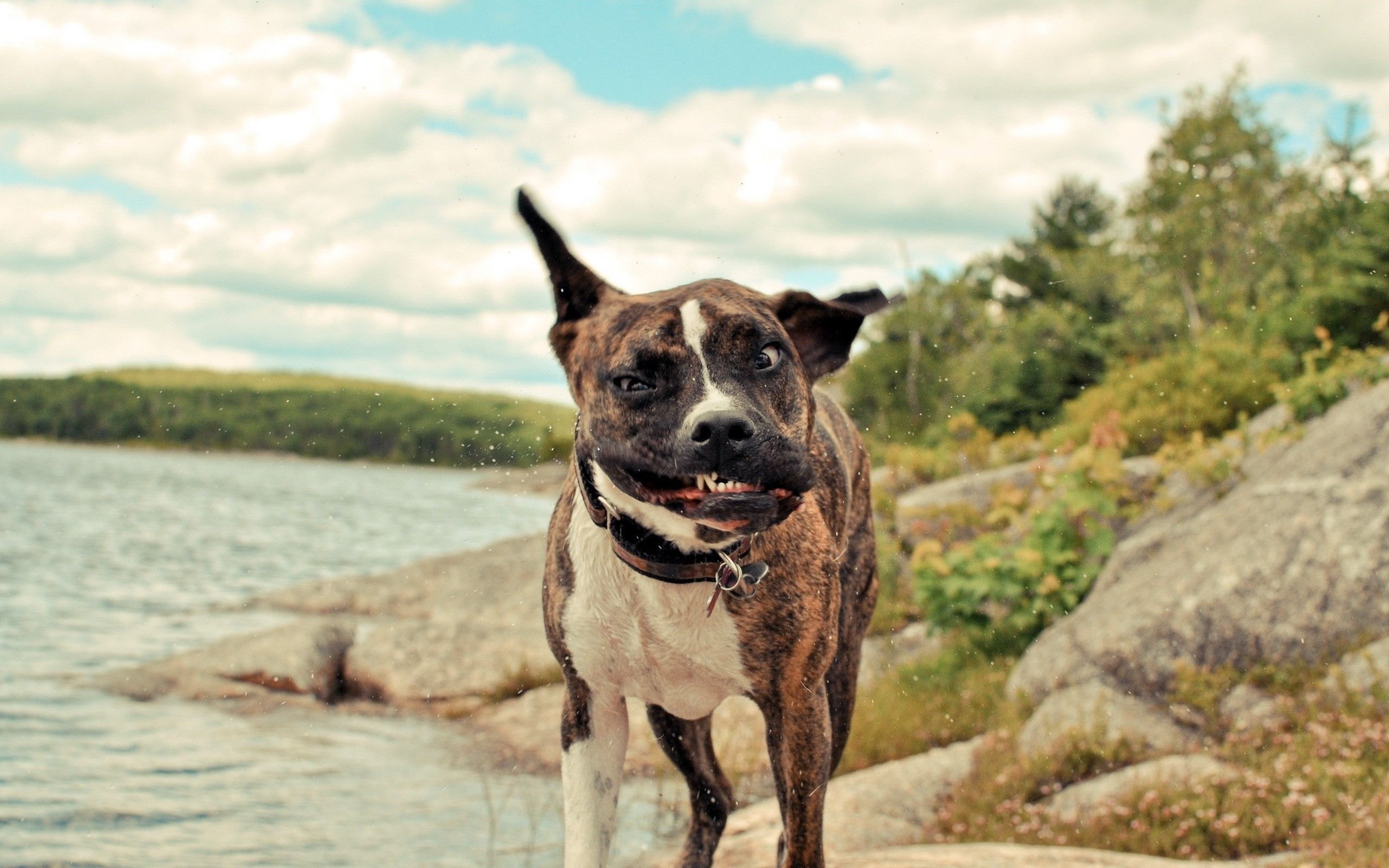 2560x1600 Funny Dogs Wallpapers Images Photos Pictures Backgrounds