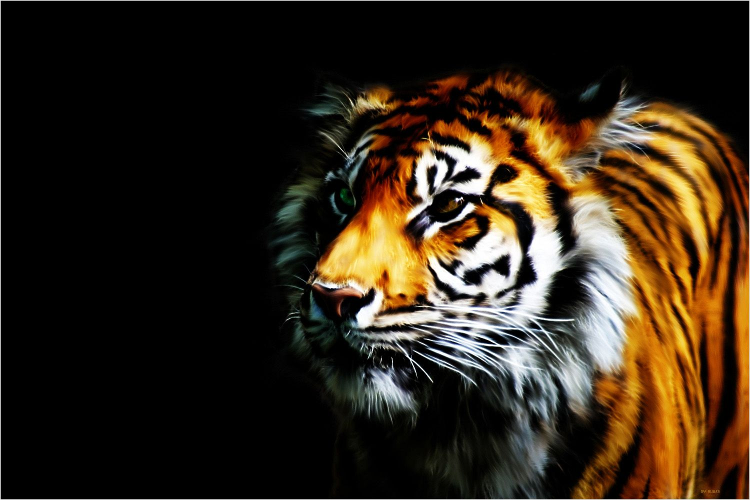 1500x1000 Wallpaper Tiger Collection For Free Download