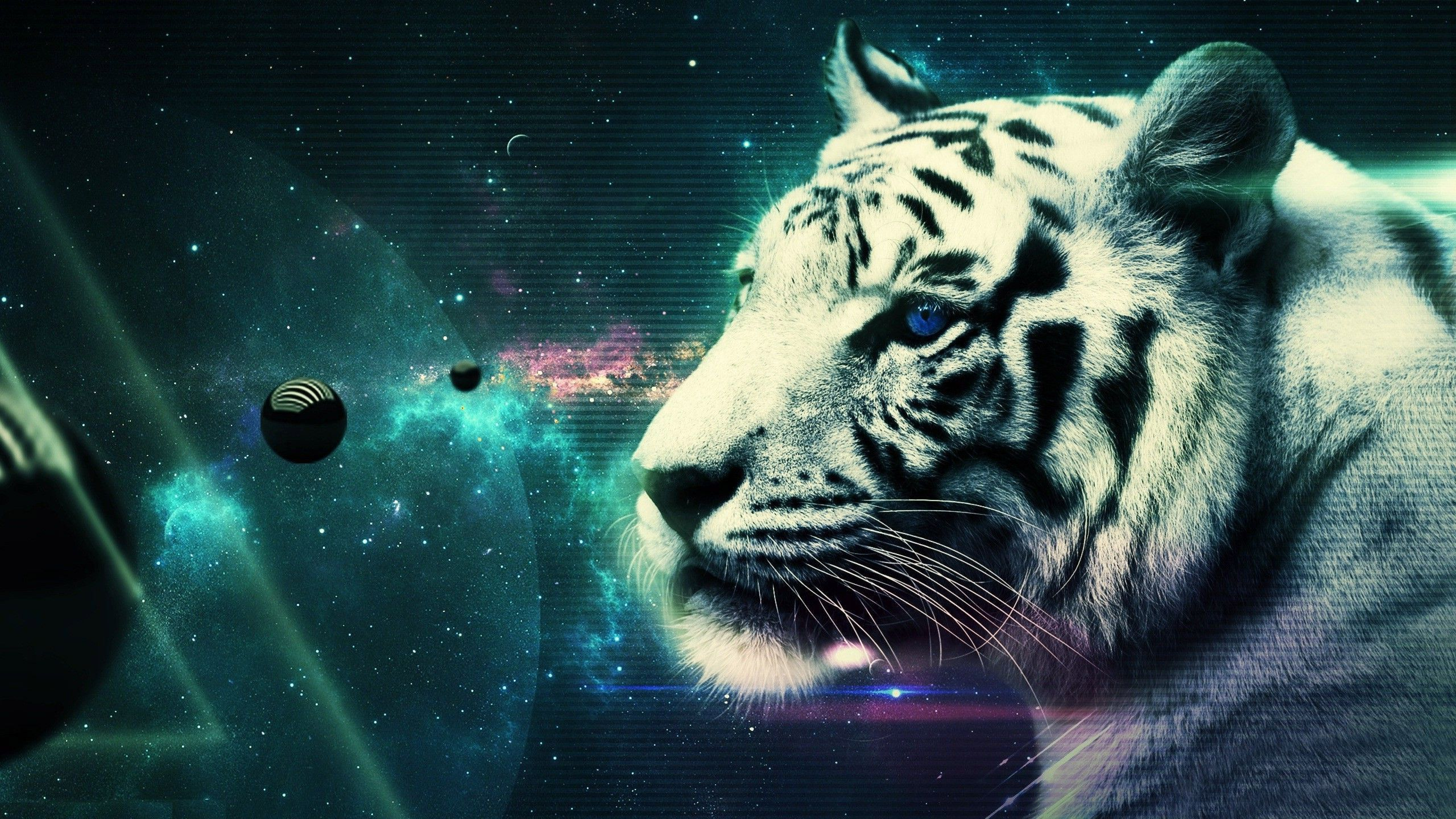 2560x1440 White Tiger Wallpapers Gallery (81 Plus) - juegosrev.com - Page 2 of ...