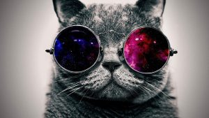 Glasses Cat Galaxy Wallpapers – Top Free Glasses Cat Galaxy Backgrounds