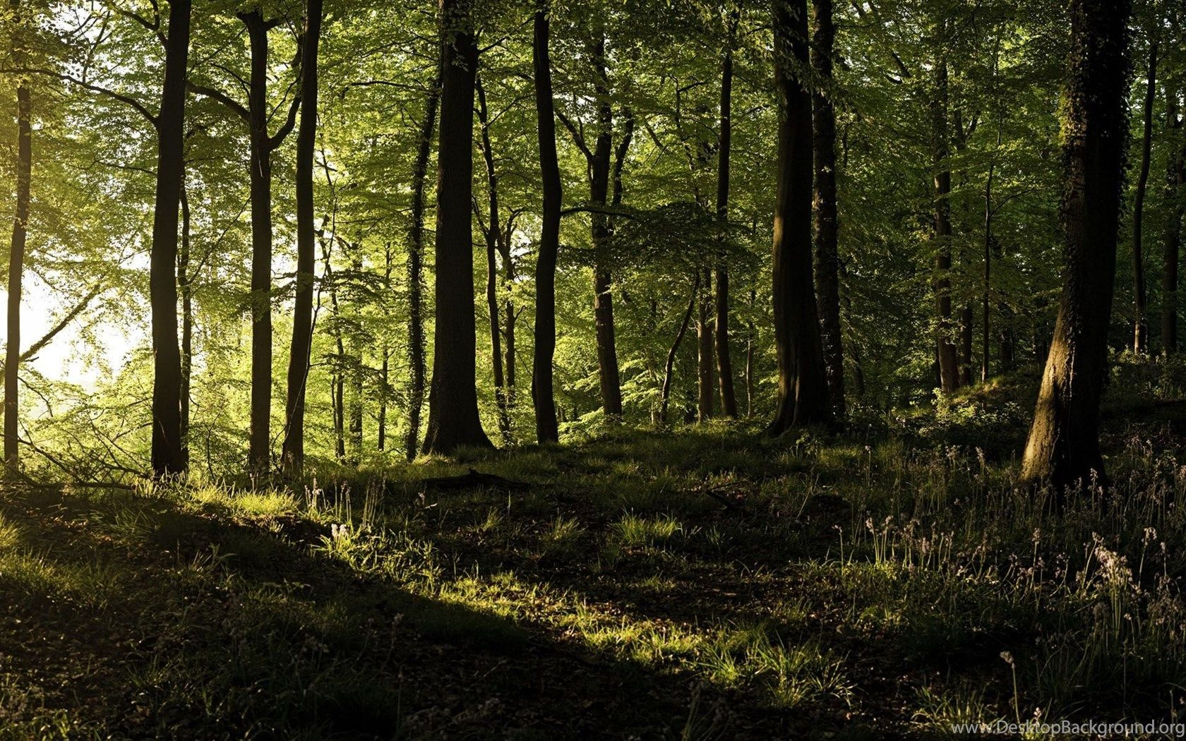 1680x1050 Sunshine In Forest Dual Screen Wallpapers Desktop Background