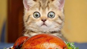 Thanksgiving Cat Wallpapers – Top Free Thanksgiving Cat Backgrounds
