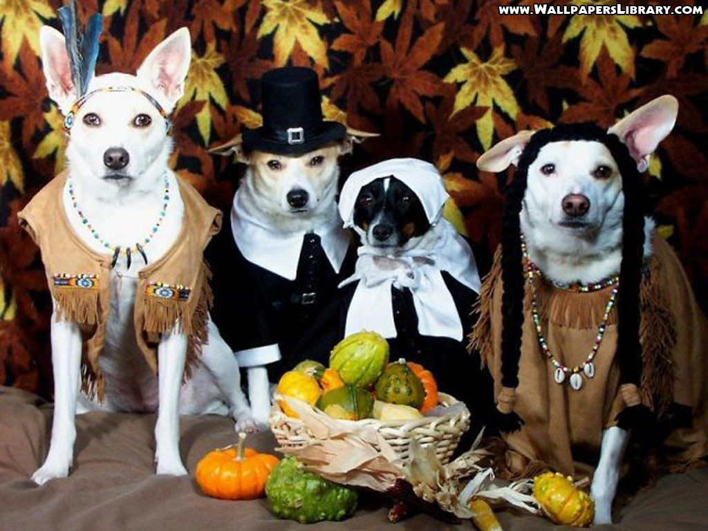 1024x768 Funny Dogs In Costumes Wallpaper | Projects to Try | Pinterest ...