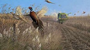 Pheasant Hunting Desktop Wallpapers – Top Free Pheasant Hunting Desktop Backgrounds