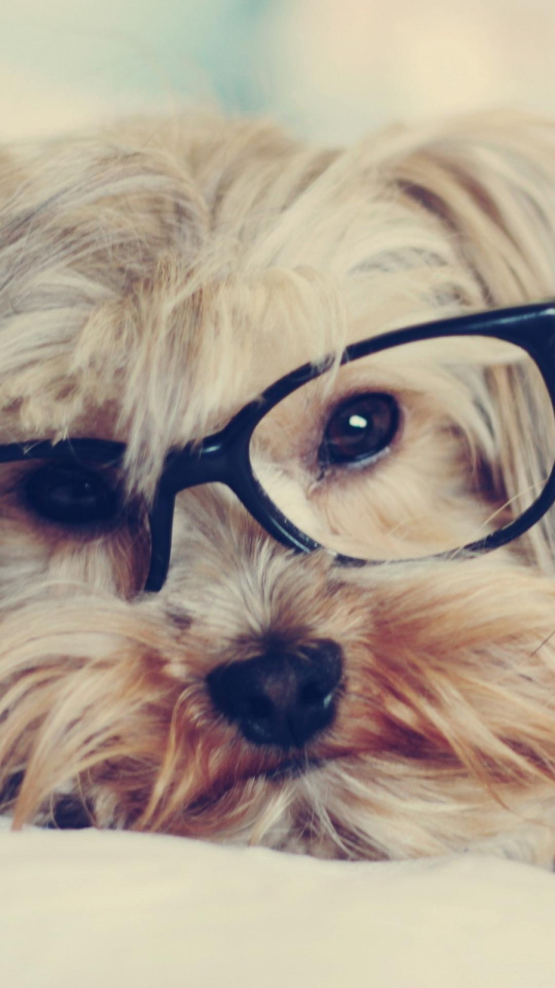 1080x1920 Animals dogs glasses puppies hipster wallpaper | (113255)