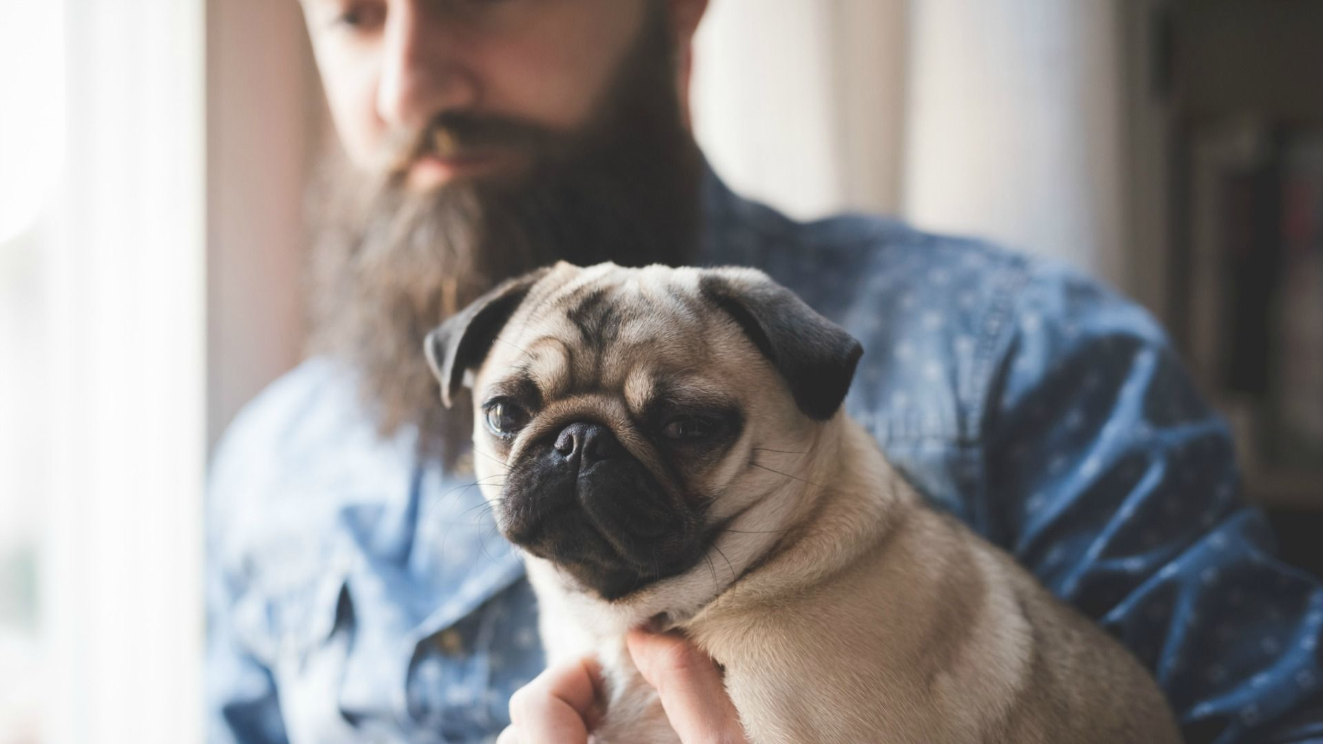 1920x1080 6 dog breeds to match your hipster lifestyle