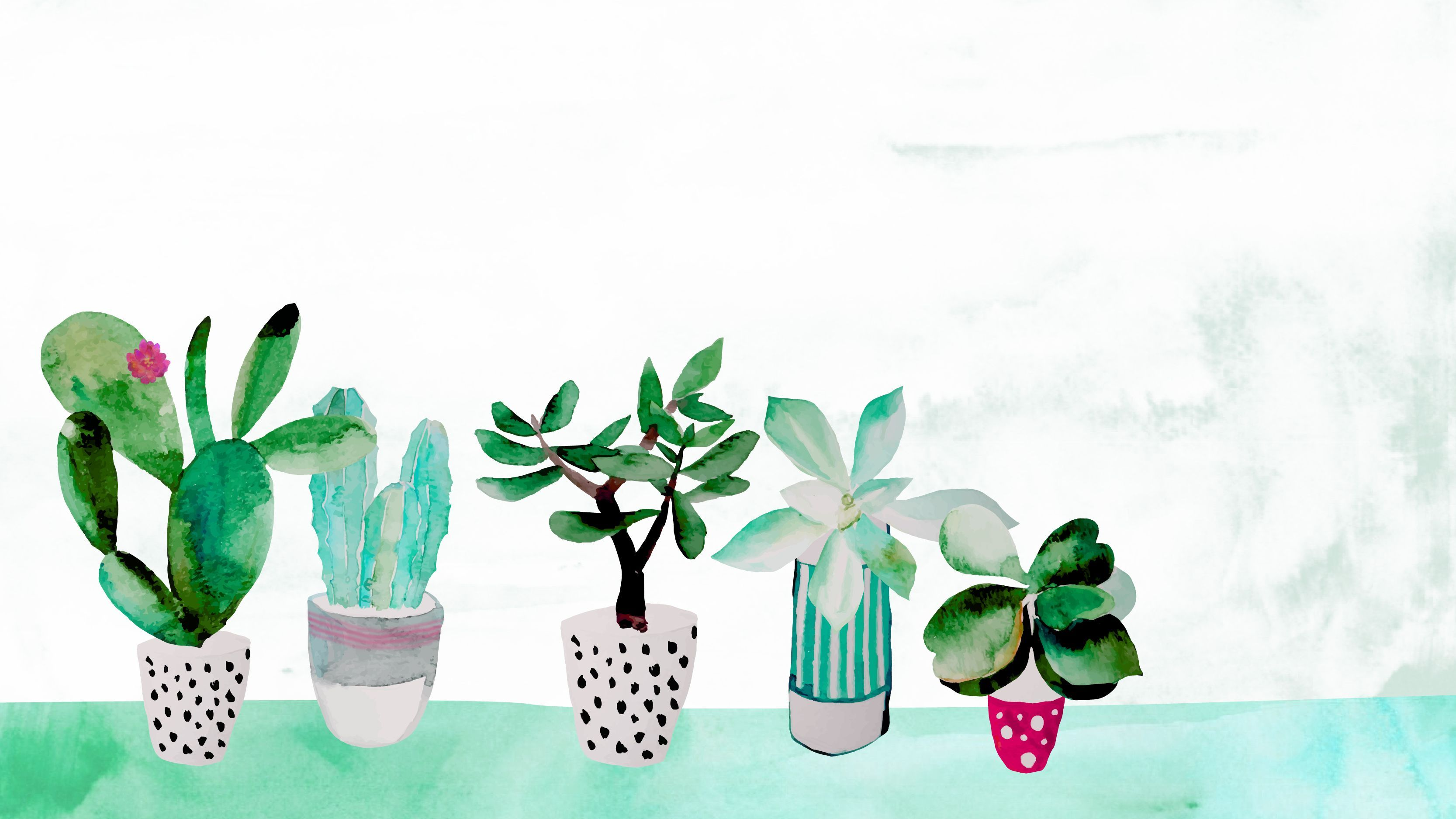 3333x1875 Pin by Aria Quintana on Desktop wallpapers | Succulents ...