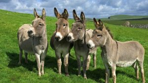 Donkey Wallpapers – Top Free Donkey Backgrounds