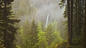 Pacific Northwest Forest Wallpapers – Top Free Pacific Northwest Forest Backgrounds