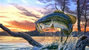 Bass Fish Wallpapers – Top Free Bass Fish Backgrounds