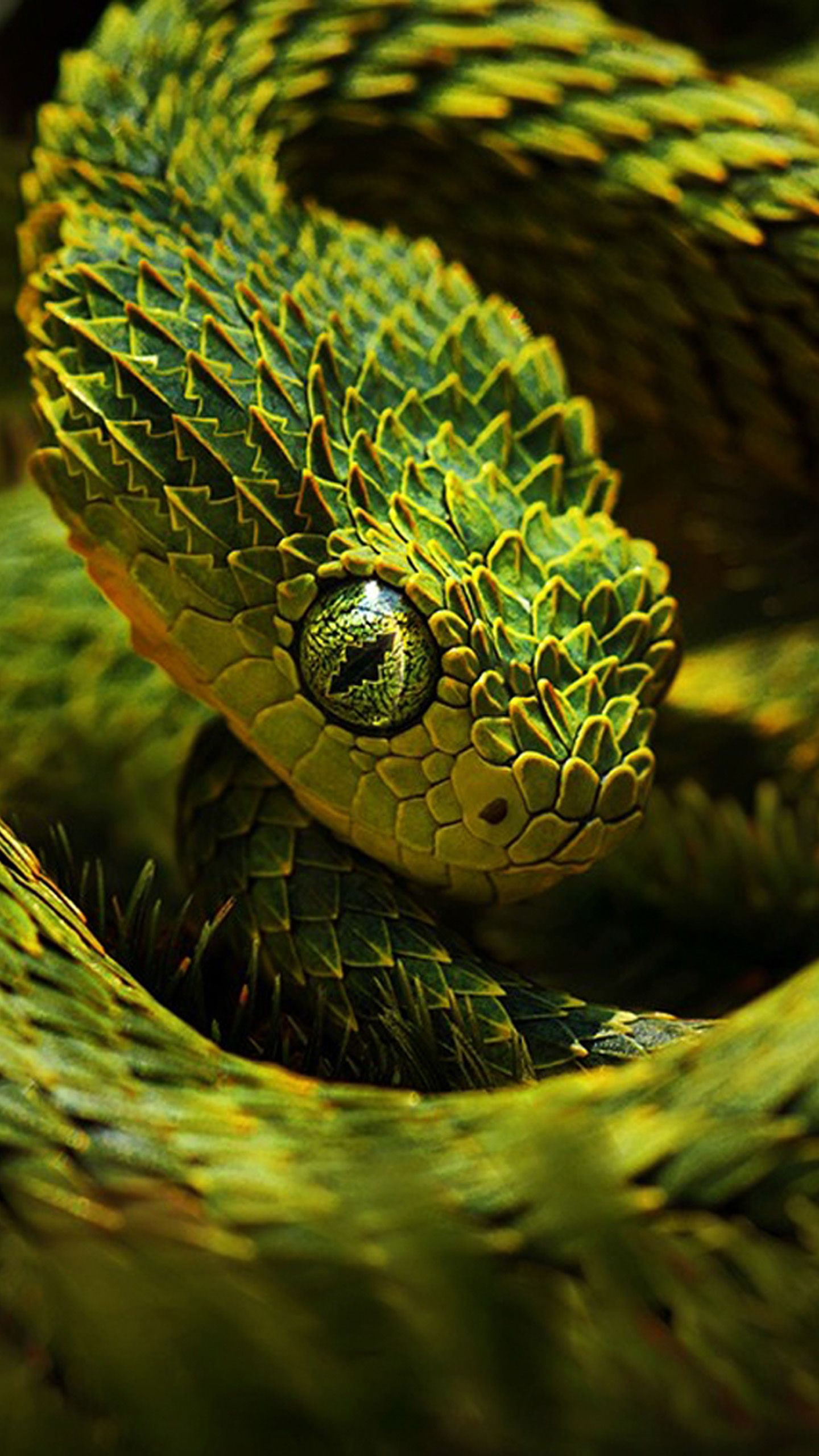 1440x2560 47 Snake Wallpapers, HD Creative Snake Wallpapers, Full HD Wallpapers