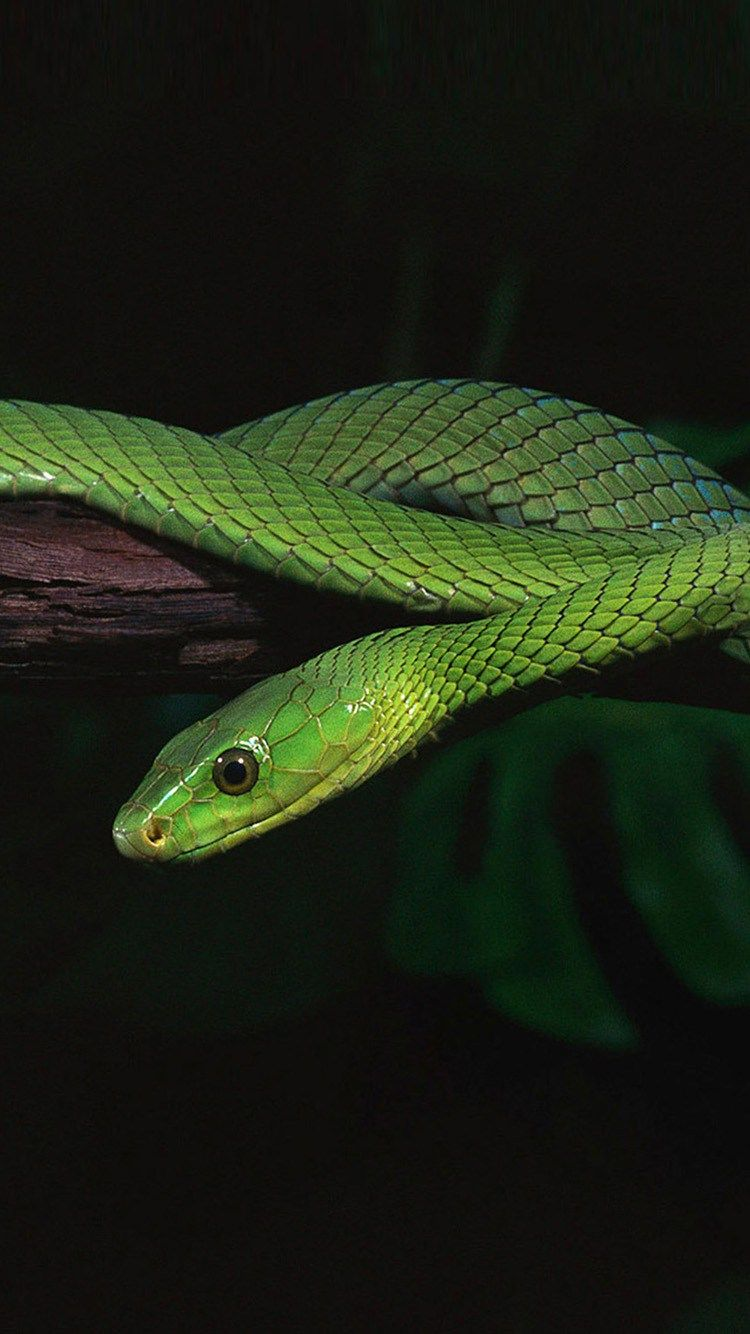 750x1334 Green Snake HD IPhone 6 Wallpapers | Pinofy.Net