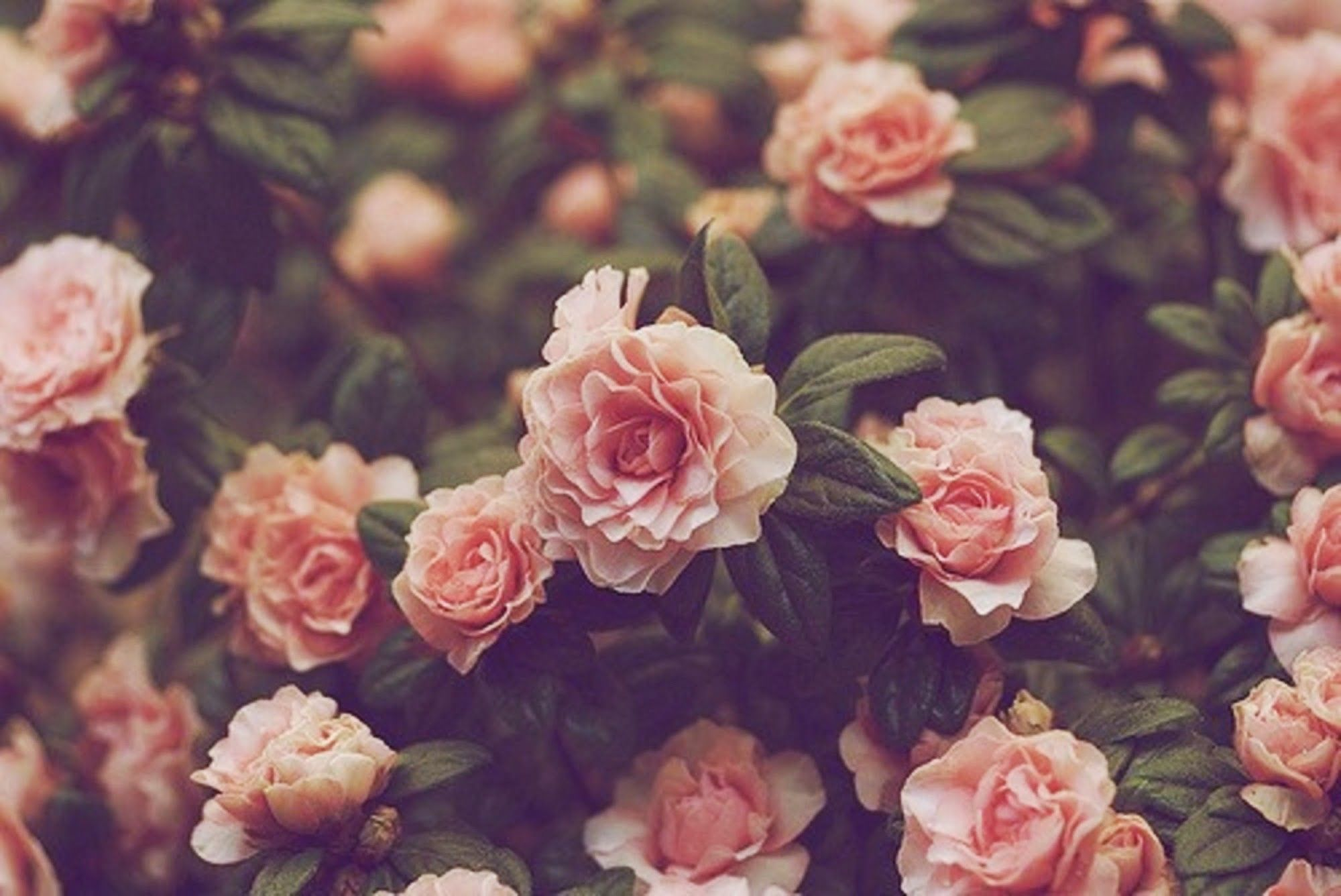 2000x1336 Hipster Flower Backgrounds (51+ images)